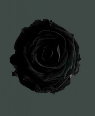 Rosa Real LUXURIOUS BLACK