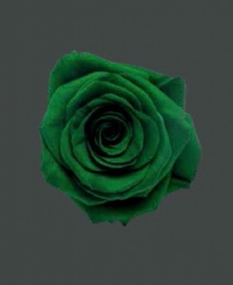 Rosa Real EXQUISITE GREEN